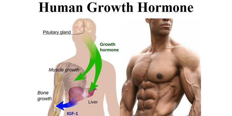 هورمون رشد برای بدنسازان