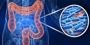 تاثیر پروبیوتیک در بدنسازی